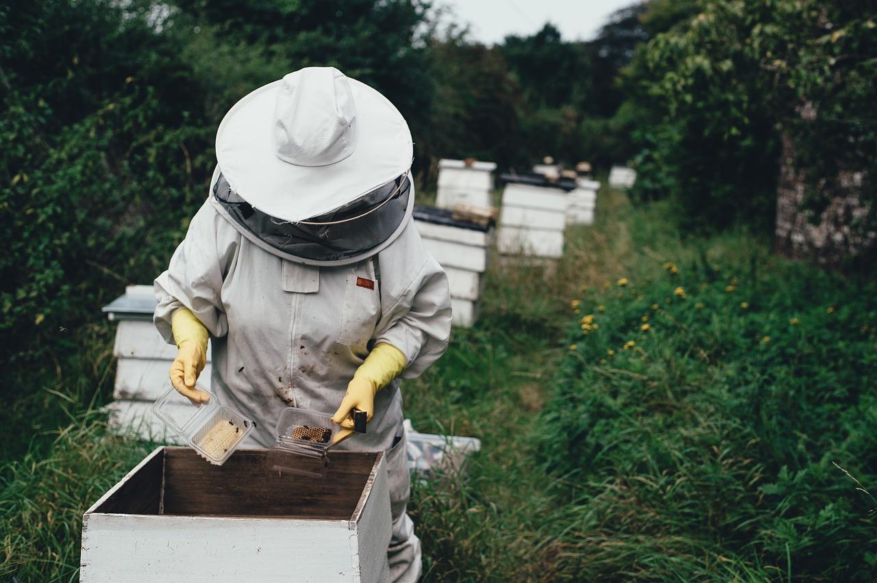 apiary, bee, bee farm-1866740.jpg